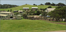 Ace Hi Riding Ranch - Perisher Accommodation