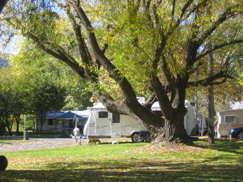 Tumbarumba Creek Caravan Park - Perisher Accommodation