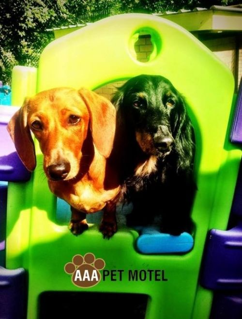 AAA Pet Motel - Perisher Accommodation