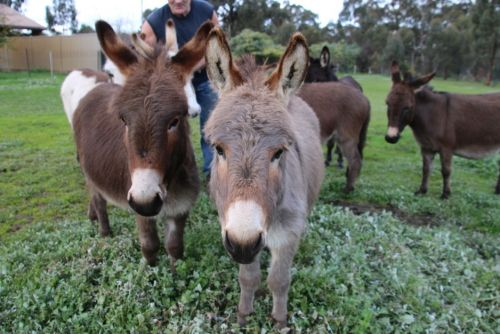 Donkey Tales Farm Cottages