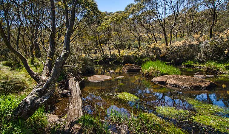 Junction Pools campground - Perisher Accommodation