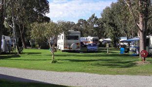 Pinjarra Caravan Park - Perisher Accommodation