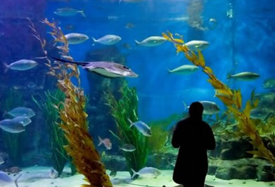 Melbourne Aquarium - Perisher Accommodation