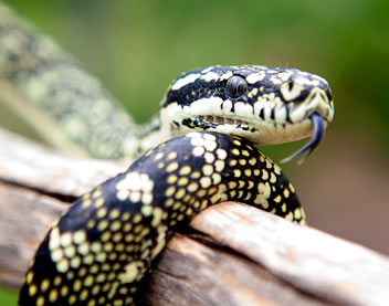 Reptile Encounters - Perisher Accommodation