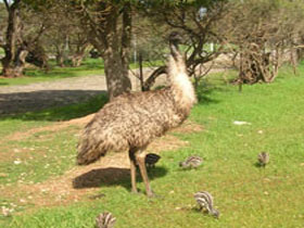 Minlaton Fauna Park - Perisher Accommodation