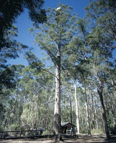 Diamond Tree Lookout Manjimup - Perisher Accommodation