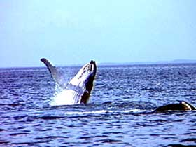 Whale Watching - Perisher Accommodation
