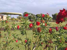 Elizabeth Park Rose Gardens - Perisher Accommodation