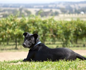 Moothi Estate Vineyard and Cellar Door - Perisher Accommodation