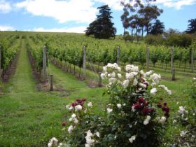 Pembroke Estate Vineyard - Perisher Accommodation