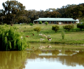 Clearview Alpacas - Perisher Accommodation