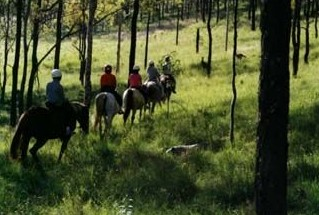 Hunter Valley Horse Riding and Adventures - Perisher Accommodation