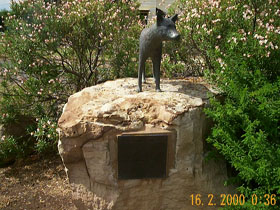 Dingo Statue - Perisher Accommodation