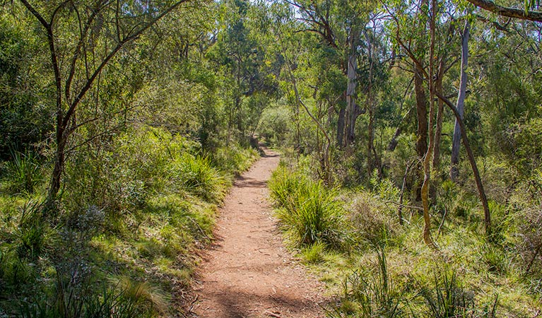 Mares Forest Creek walking track - Perisher Accommodation
