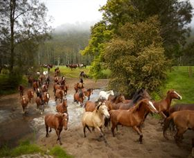 Glenworth Valley Horse Riding - Perisher Accommodation