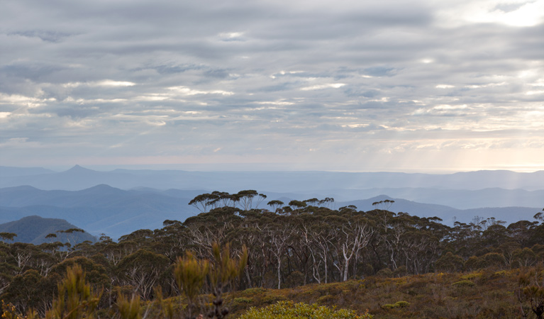 Mount Budawang trail - Perisher Accommodation