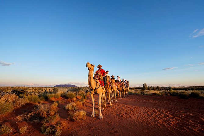 Uluru Camel Express Sunrise or Sunset Tours - Perisher Accommodation