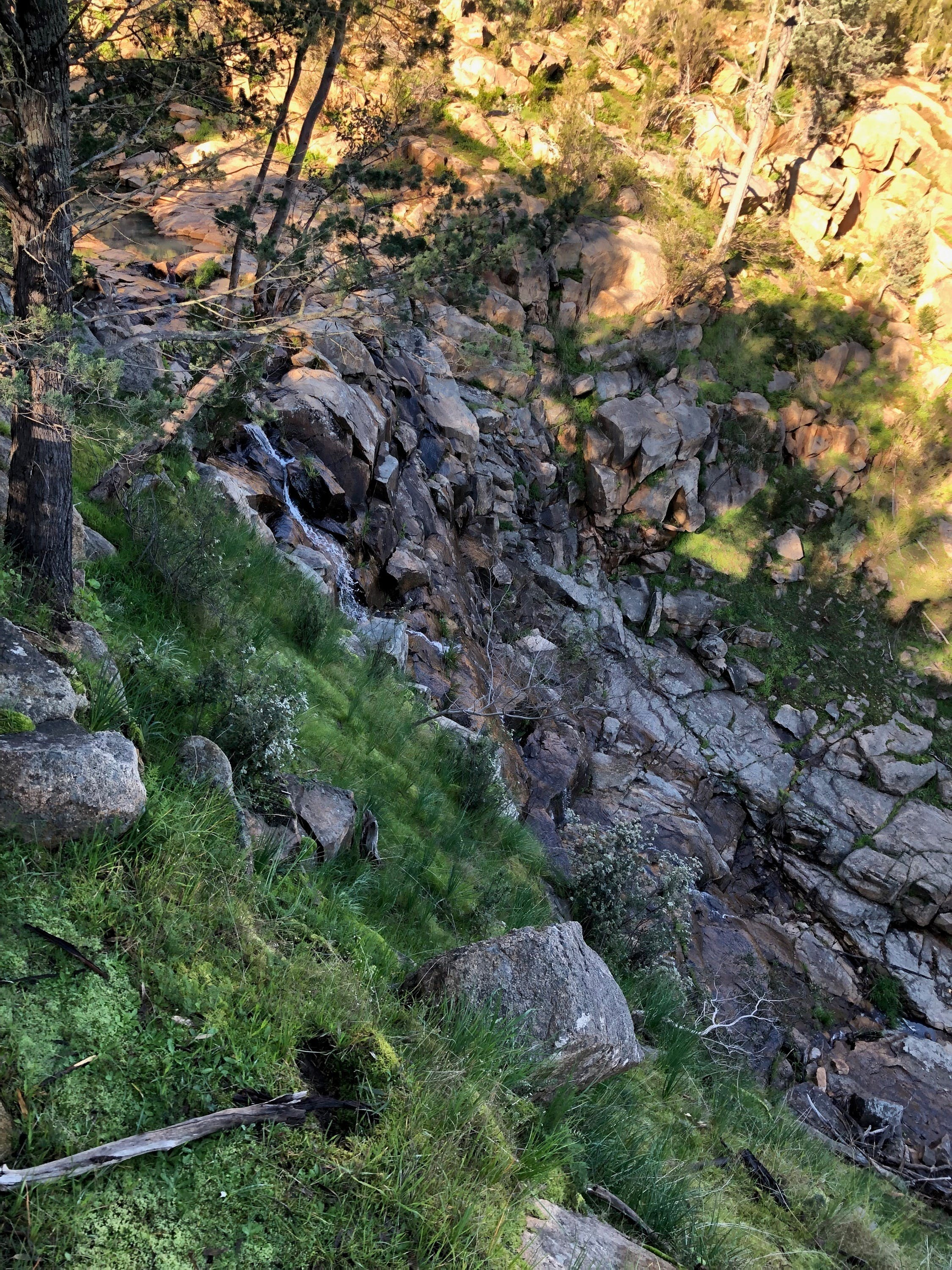Pine Gully Nature Trail - Perisher Accommodation