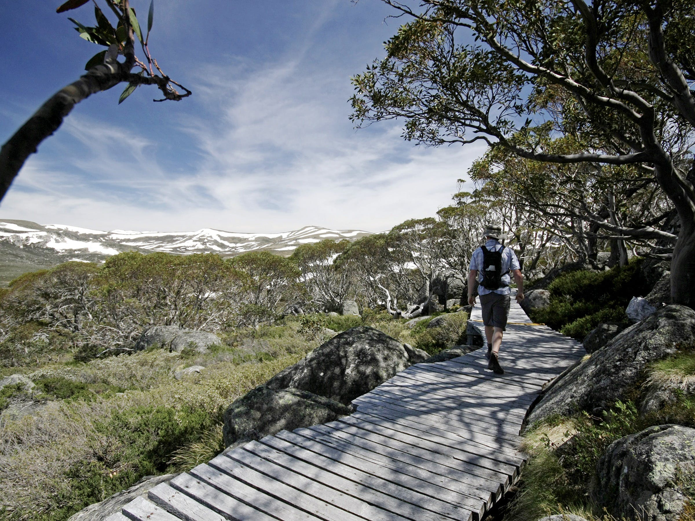 Snow Gums boardwalk - Perisher Accommodation