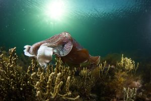 Cuttlefish Diving  Snorkeling EVERYDAY May -August - Perisher Accommodation