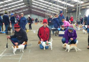 Hamilton Jack Russell Terrier and Hunting Dog Show - Perisher Accommodation
