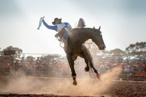 Rodeo by the Sea - Streaky Bay - Perisher Accommodation